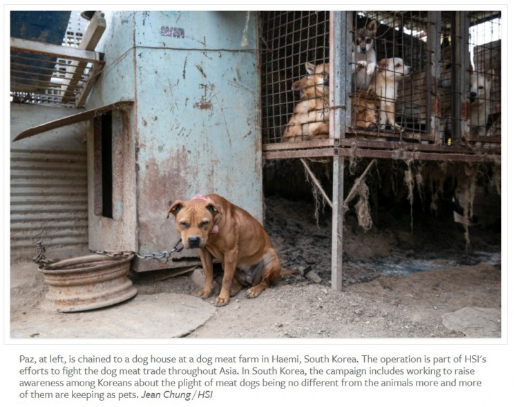 170 dog meat trade survivors touch down in the United States; new poll shows a growing majority of South Koreans reject dog meat