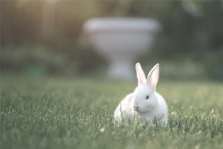 #BeCrueltyFree - Campaign to end cosmetic testing on animals