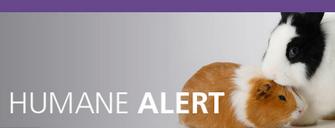 Support Legislation to End Cosmetics Testing on Animals