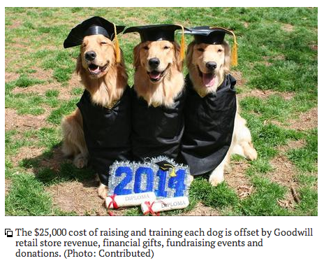 Goodwill Assistance Dog Academy graduates second class
