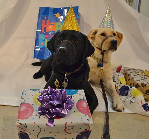 Canine Partners for Life 25th Birthday Party & Open House