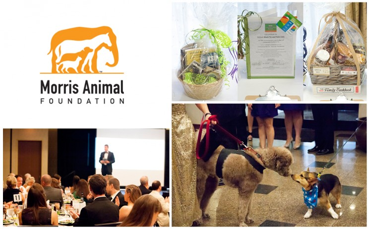 Morris Animal Foundation Partners With Radio Systems Corporation