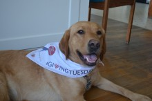 Alice 2016-08-16 Giving Tuesday Canine Partners