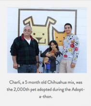 Charli the Chihuahua gets adopted